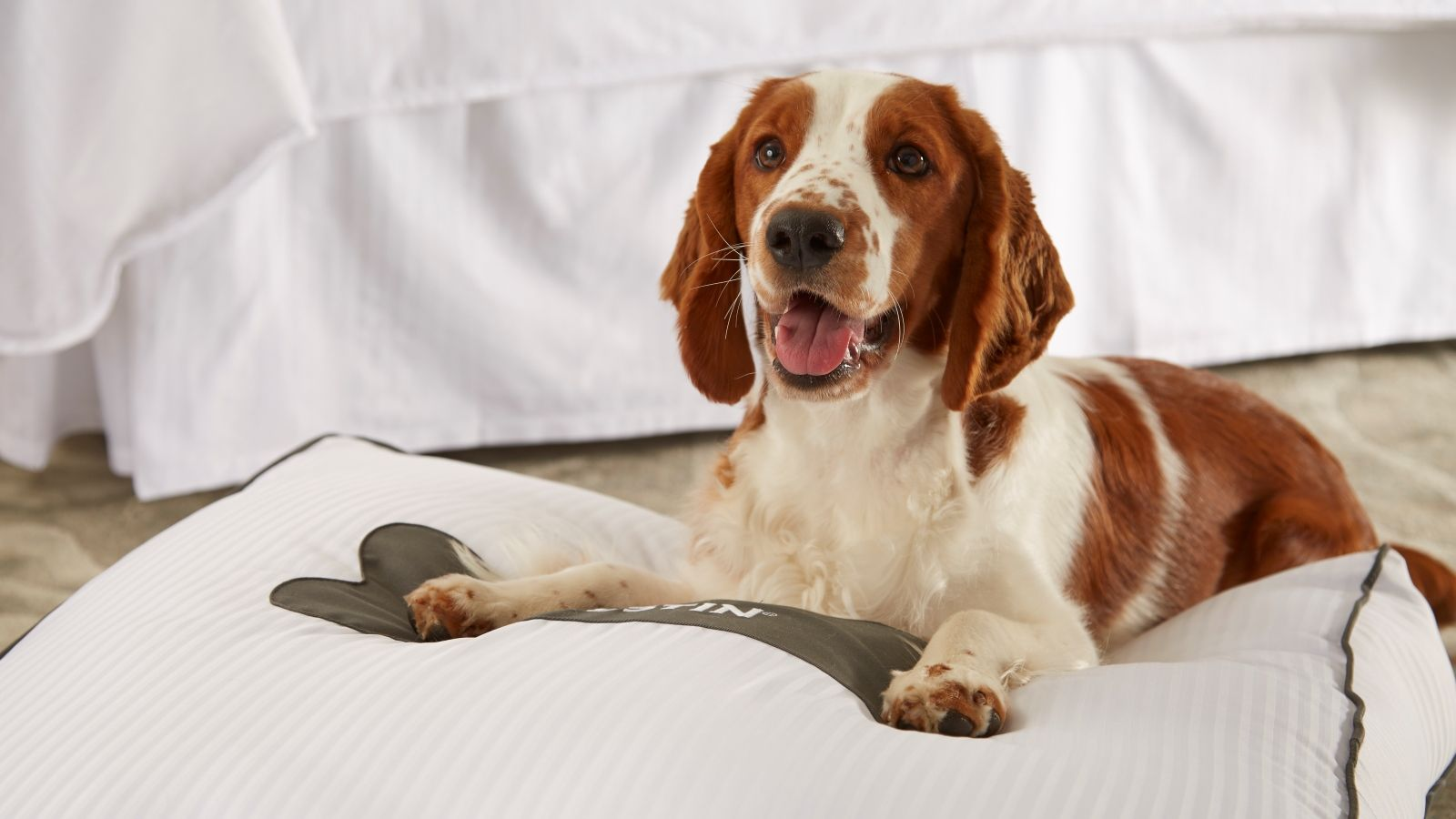 dog-friendly napa hotel